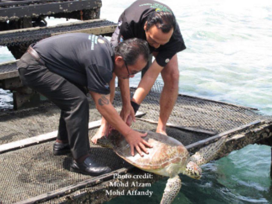 7th Borneo Divers' Celebration of Sea Turtles in Mabul 2019 (post-event) Press Release